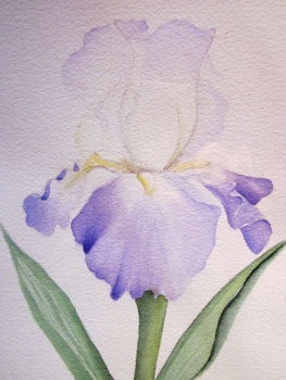 Patsy Schultis Iris - Watercolor